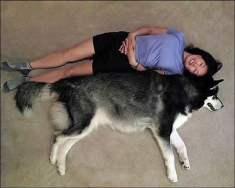 En büyük köpekler galerisi resim 9
