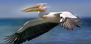 Çift başlı doğan hayvanlar