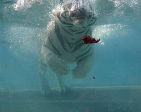 Su altında beslenme saati galerisi resim 2