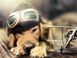 """""""Bir Köpeğin Günlük Macerası"""""""