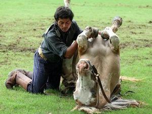 Atlarla konuşan adam