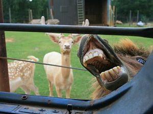 Fotograf meraklısı atlar