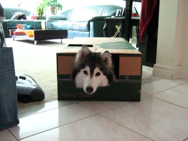Kedi gibi davranan köpek! galerisi resim 1