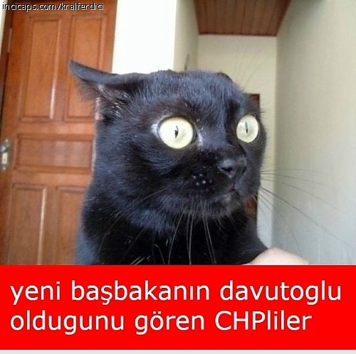 Davutoğlu'nun güldüren capsleri galerisi resim 22