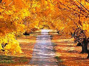 Sonbaharın yakıştığı en güzel yerler