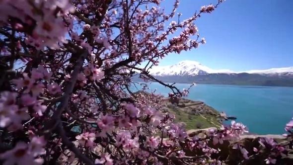 Ziyaretçisiz kalan Akdamar Adası badem çiçekleri ile görsel bir güzellik galerisi resim 1