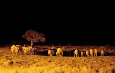 VAHŞİ DOĞA VE GÜNEY AFRİKA galerisi resim 13