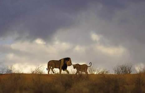 VAHŞİ DOĞA VE GÜNEY AFRİKA galerisi resim 8