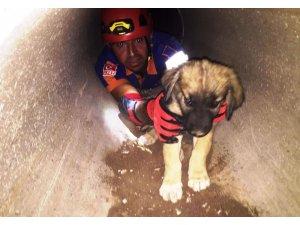 Kanalizasyonda mahsur kalan yavru köpekler kurtarıldı