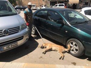 Birecik'te başıboş köpekler bayıltılarak barınaklara götürüldü