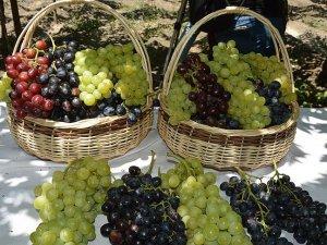 Türkiye'nin yaş üzüm ihracatı yüzde 86,7 arttı
