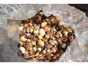 TMO Manisa ve ilçelerinde ilk kez haşhaş kapsülü ve ürünlerini alınmaya başlandı