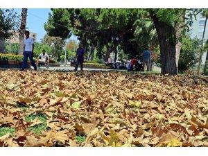 Antalya'da aşırı sıcakla gelen sonbahar görünümü