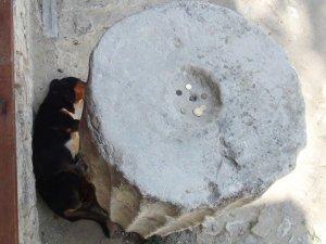 600 yıllık 'Sadaka Taşı' hayvanlara umut oldu