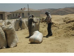 50 bin ton hububat alımı gerçekleştirildi