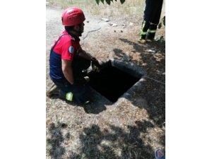 Su kuyusuna düşen eşeği itfaiye eri halatla çıkardı