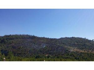 Yayladağı'nda çıkan orman yangını söndürüldü