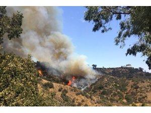 Griffith Park'ta yangın çıktı