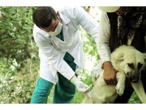 Mamak'ta evcil hayvanlar aşılanacak
