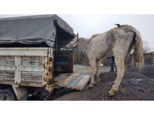 Hayvanlara işkence yapanlara ceza yağdı