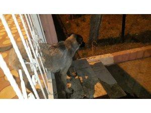 Demir korkuluklara sıkışan köpeği polis ve hayvan severler kurtardı