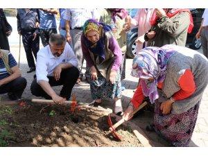 Başkan Kılıç, Bafra Huzurevi'nin bahçesine çiçek dikti