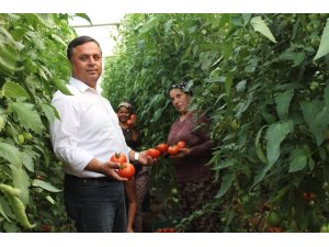 Çal'da 3 yıl önce başlatılan örtü altı seracılık meyvelerini vermeye başladı