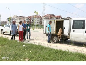 Sokak köpekleri tedavinin ardından doğal yaşama alanlarına kavuştular