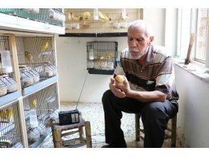 Kuşlarına Türk Sanat Müziği dinletiyor