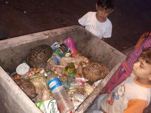 Çöpe konteynerine atılan 3 kaplumbağa kurtarıldı