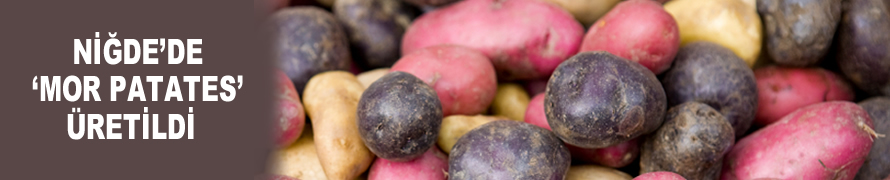 Niğde'de 'mor patates' üretildi