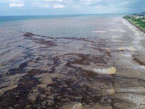 Tarım ve Orman Bakanı Pakdemirli: Fındık üreticisinin sel zararı telafi edilecek