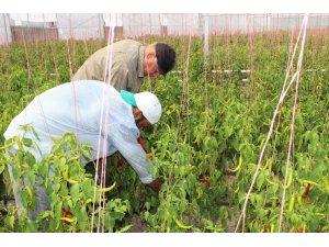 Mültecilerin hayal örtüsü ilk hasadını verdi