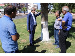 Şanlıurfa'da ağaç koruma çalışmaları