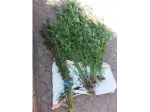 Sakarya'da 500 gram kubar esrar ele geçirildi