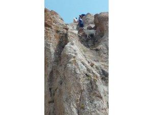 Ağrı AFAD'tan filmleri aratmayan keçi kurtarma operasyonu