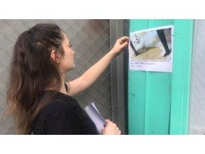 Genç kadın evden kaçan kedisini sokak sokak arıyor