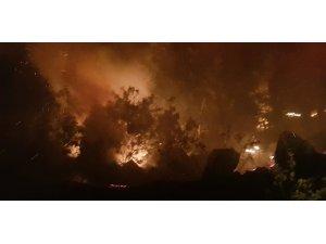 Adıyaman'da orman yangını paniğe neden oldu