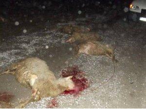 Kamyonet koyun sürüsüne daldı: 35 hayvan telef oldu