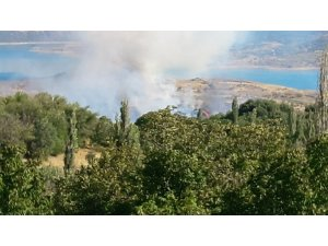 Anız yangınında ağaçlar zarar gördü