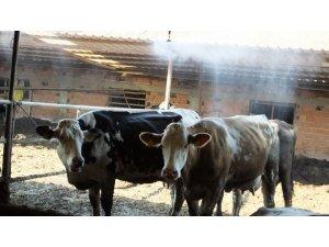 Fıskiye ile serinleyen ineklerde verim arttı