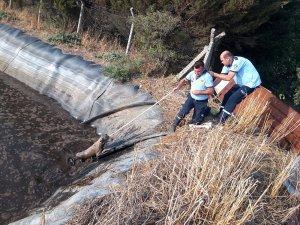 Hayvan atık çukuruna düşen köpekler kurtarıldı