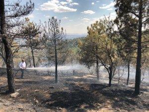 Vatandaşlardan orman yangınına canla başla müdahale
