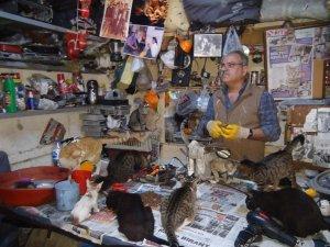 Sokak hayvanlarına kucak açan hayvansever yetkililerden yardım bekliyor