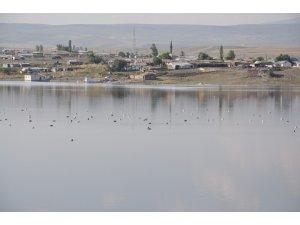 Kars Baraj Gölü yaban hayatına ev sahipliği yapıyor