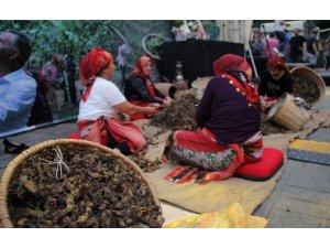 Fındığın Başkenti Giresun'da fındık festivali düzenlendi