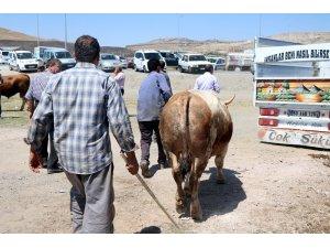 Kurban Bayramı'nda 27 bin 925 hayvan kesildi