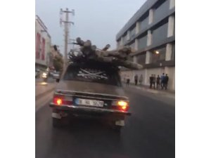 Otomobil üzerinde odun sevkıyatı