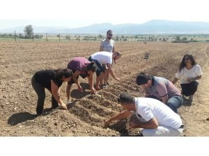 Antalya'da 'Safran' Korkuteli'nde üretiliyor
