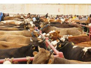 Kastamonu'da 27 bin 748 hayvan kurban edildi